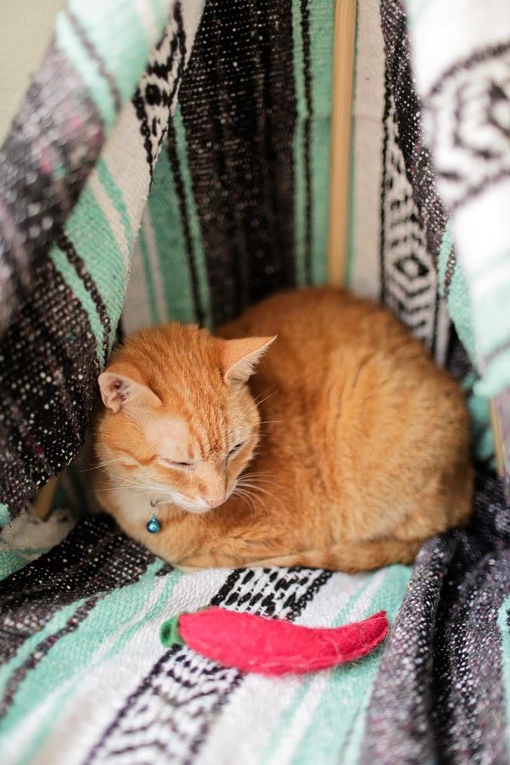 DIY Cat Tent.