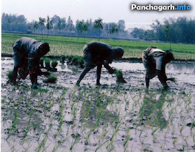 Photo: Farmers in Panchagarh