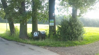 Photo: Die Baumstämme des Naturdenkmals ,Fünf Eichen' am Ruhrhöhenweg Süd.