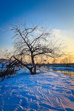Photo: Sloping tree...  #tree #winter #landscapephotography #winterphotography