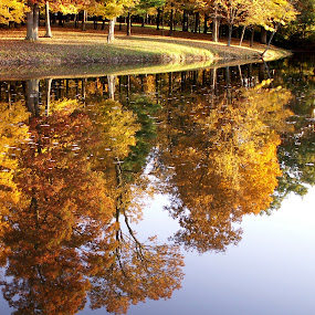 Mining for Gold by Jenny Gandert - Landscapes Waterscapes ( water, autumn, blue, green, lake, gold, leaves )