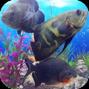Oscar Fish Pos   Oscar Fish Aquarium Video 3d Programme Op Google Play