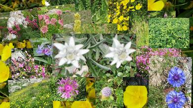 Photo: bloemenpracht met edelweis
