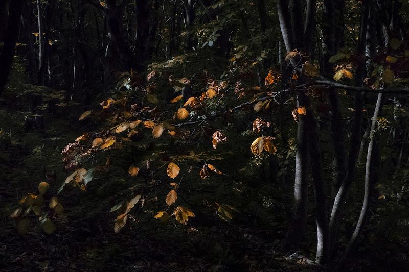 """Si sta come d'autunno sugli alberi le foglie. """"Soldati"""" (G. Ungaretti) di LuXi"""
