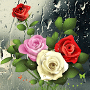 Drop Roses v 1.1.2 app icon