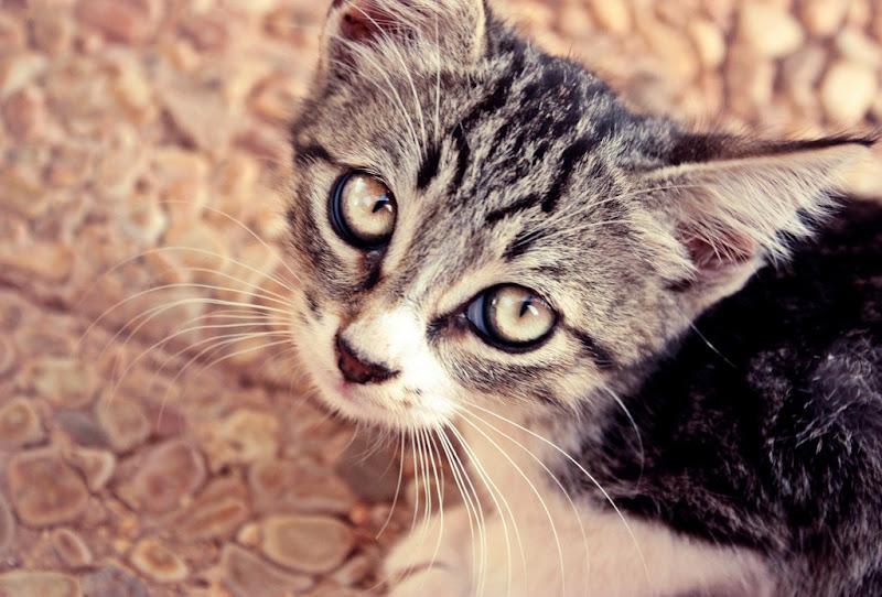 Occhi di gatto di utente cancellato