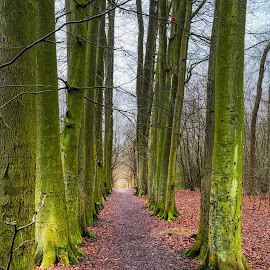 Arundel by Gjunior Photographer - Nature Up Close Trees & Bushes ( forest, nature, landscape )