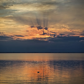 Seagull at sunset by Michaela Firešová - Landscapes Cloud Formations ( seagull, sunset, clouds, colours )