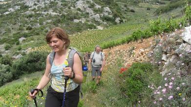 Photo: De wijnvelden boven Sveta Nedjelja dat zijn wijncontainers bewaart in zee