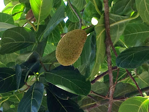 Photo: Jackfruit