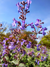 Photo: Little purple flowers at Hills and Dales Park in Dayton, Ohio.