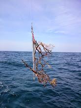 Photo: ・・・魚を釣ろう!