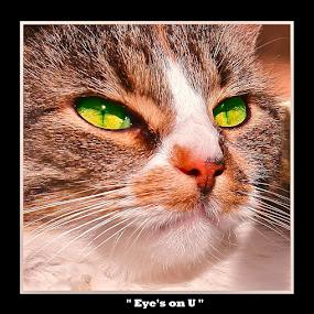{ Eye's On U }  by Jeffrey Lee - Typography Captioned Photos ( { eye's on u },  )