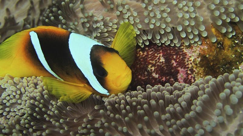 Mamma Nemo di Artlele