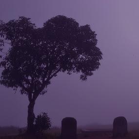 Life of a Tree! by Abhishek Majumdar - Nature Up Close Trees & Bushes