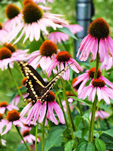 Photo: Beautiful butterfly and flowers at Cox Arboretum in Dayton, Ohio.