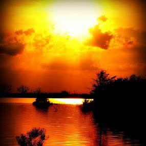 Sunset on the swamp by Jennifer Eaton Roberts - Landscapes Sunsets & Sunrises ( silhouettes of nature, orange, sunset, madisonville, swamp )