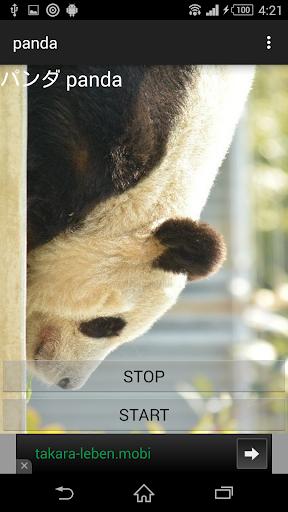 動物鳴き声ジャイアントパンダ