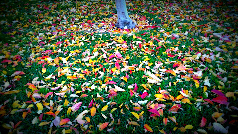 Photo: Fall is coming!