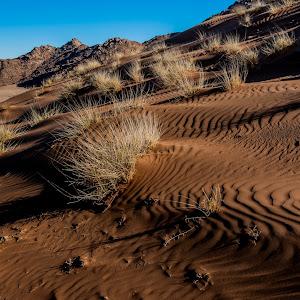 20130720-Namib Desert Photo Tour-156.jpg