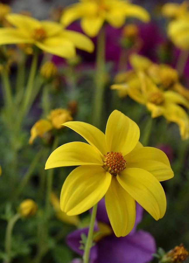 by Rany Haj - Nature Up Close Flowers - 2011-2013 (  )