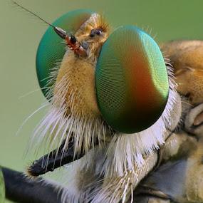 my shiny eyes by Sam Moshavi - Animals Insects & Spiders
