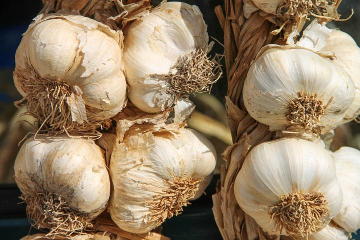 Photo of heads of garlic
