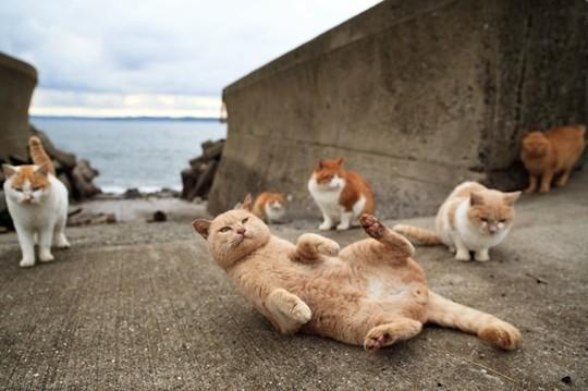 mèo trên đảo aoshima