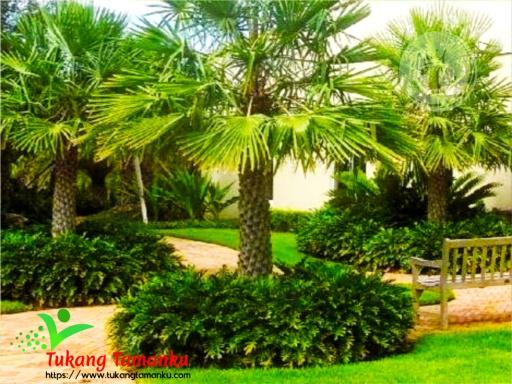 jenis tanaman untuk taman