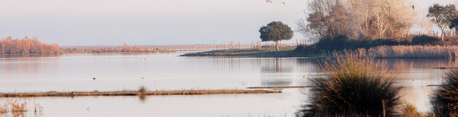 Doñana natural park