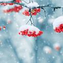 Beautiful Winter Live Wallpaper icon