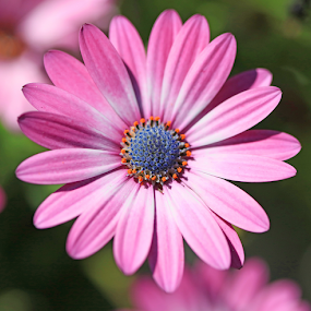 by Lauren Manzano - Flowers Single Flower