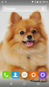 Download Pomeranian Dog Wallpaper Hd Apk Latest Version App For