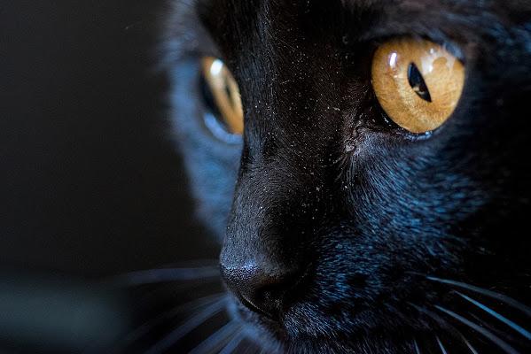 Black panther di CarloMarvelli