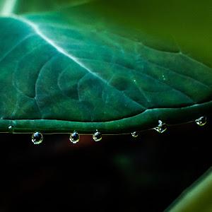 droplets-1.jpg