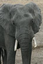 Photo: Kruger National Park. Klopperfontain Wasserloch