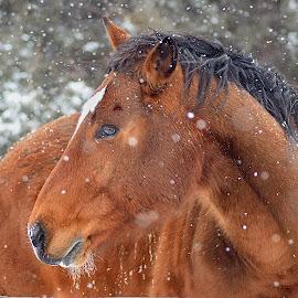 by Shawn Thomas - Animals Horses