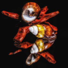 Sea shells and Drift wood by Dave Walters - Digital Art Things ( macro, nature, sea shells, lumix fz2500, colors, digital art )