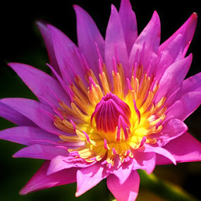 my flower by Caraka Pamungkas - Nature Up Close Flowers - 2011-2013