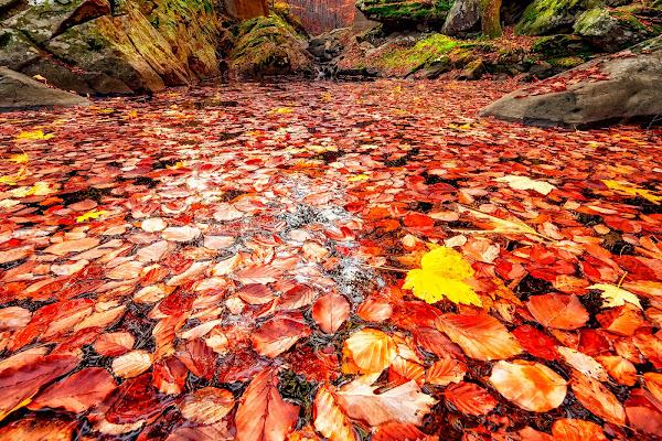 Lago dorato di felixpedro