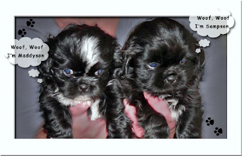 Photo: Maddyson and Sampson when they were puppies