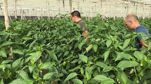 Vellsam aporta a la Escuela Agraria de Vícar su gama de nutricionales