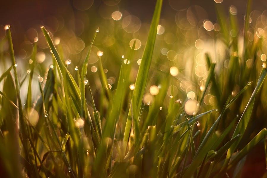 Shining by János Farkas - Backgrounds Nature
