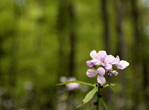 Photo: Natur, ein wichtiger Bestandteil des Borkener Seenlandes. #365tagesew www.ur-sew.de/365tage (c) Patrick Schrammel
