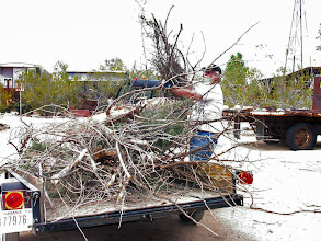 Photo: More dead wood from the Schoolhouse yard trees loaded to be hauled away. (Jackie Ridge)