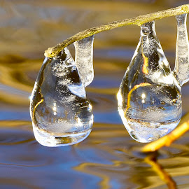 freeze by Jeff Sluder - Nature Up Close Natural Waterdrops (  )