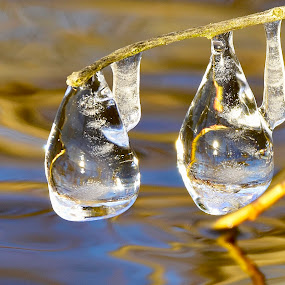 freeze by Jeff Sluder - Nature Up Close Natural Waterdrops