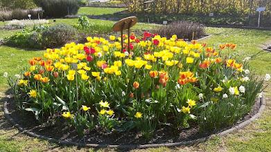 Photo: F4231059 w Ogrodzie Botanicznym