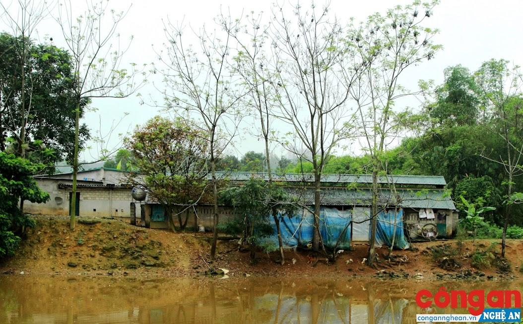 2 cơ sở chăn nuôi lợn gây ô nhiễm môi trường của gia đình ông Nguyễn Văn Sơn