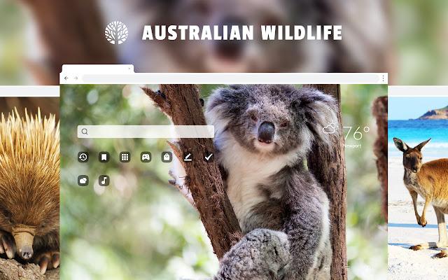 Australian Wildlife HD Wallpapers New Tab